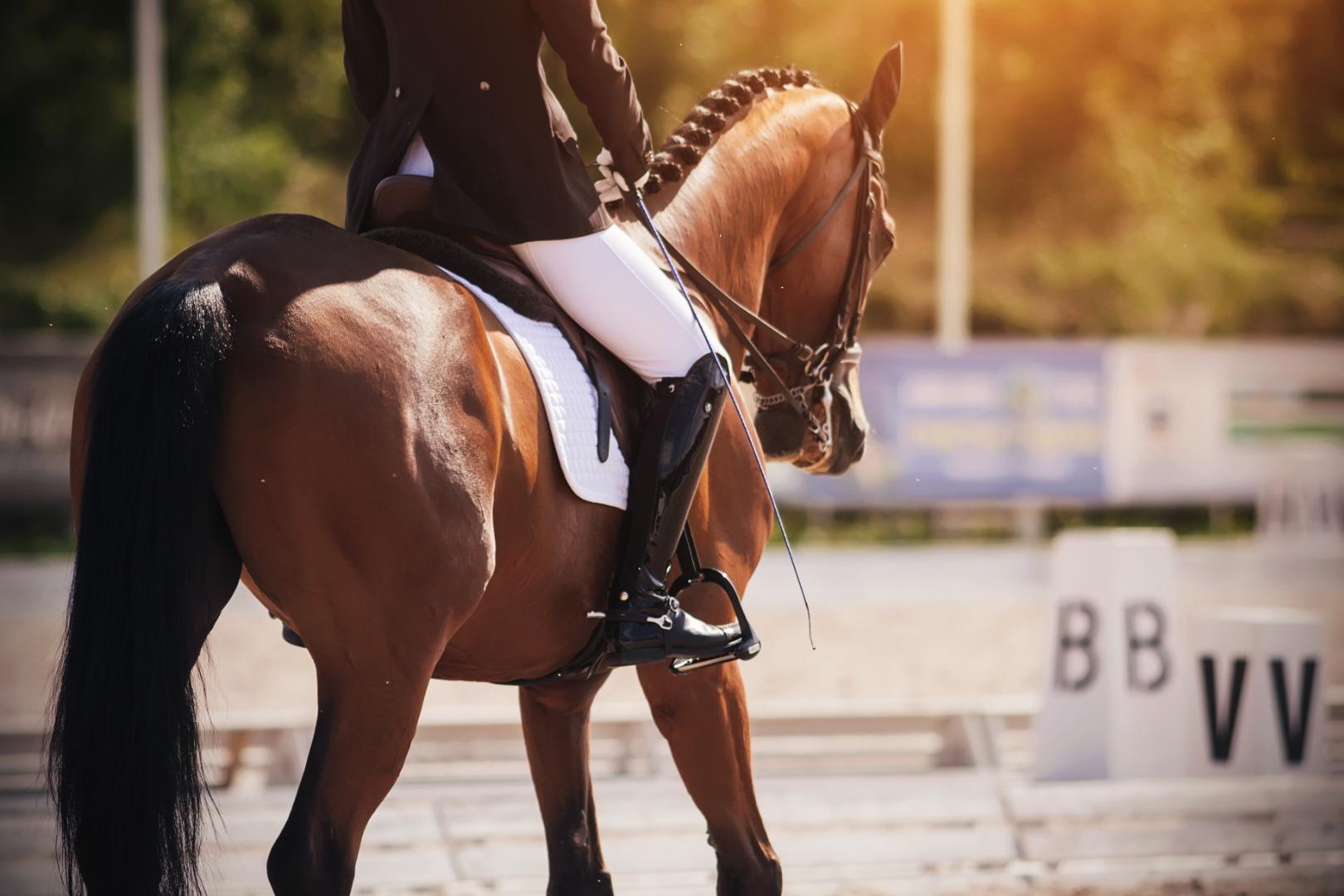 Equestrian pic